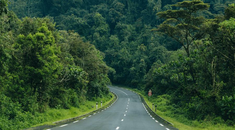 Nyungwe park, Nyungwe, Rwanda